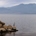A Bird on the Salton Sea